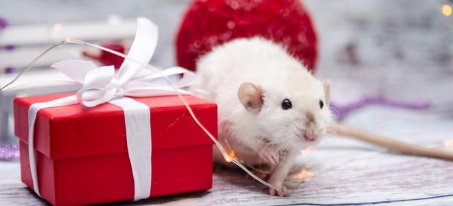 Год Крысы 2020: как встретить Новый год и чего ожидать