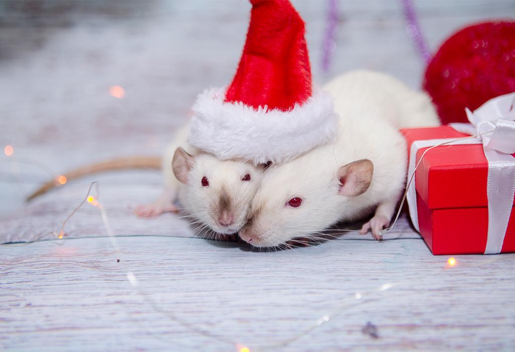 Белые крысы